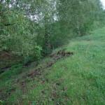 Живописный овражек вдоль ручья по участку